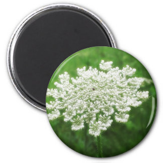 Queen Anne's Lace 1 (Wild Carrot) Magnet