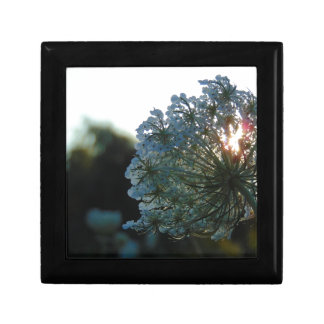 Queen Anne's Lace at Sunset Gift Box