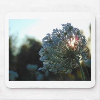 Queen Anne's Lace at Sunset Mouse Pad