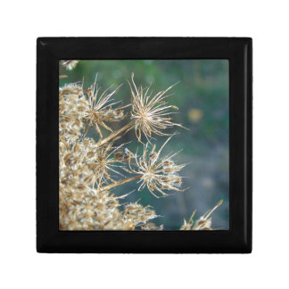 Queen Anne's Lace Close Up Small Square Gift Box