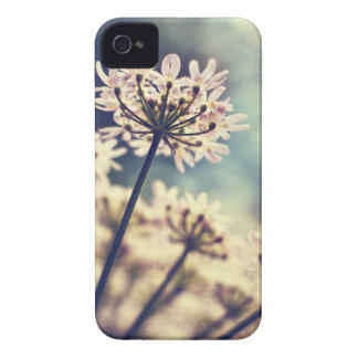 Queen Annes Lace flowers iPhone 4 case