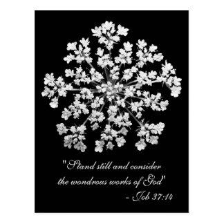 Queen Anne's Lace Job 37:14 Postcard