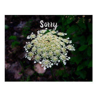 Queen Anne's Lace Postcard