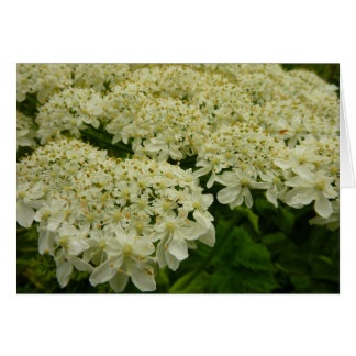 Queen Anne's Lace White Wildflower Card