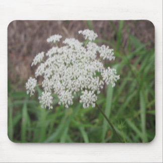 Queen Anne's Lace Wildflower Mouse Pad