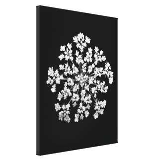 Queen Anne's Lace Wrapped Canvas Stretched Canvas Print
