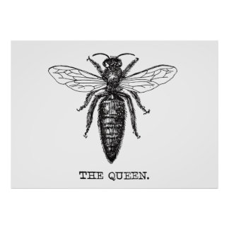 Queen Bee Illustration Black White Poster