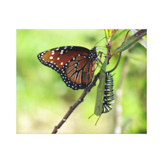 Queen Butterfly and Monarch Caterpillar Canvas Stretched Canvas Print