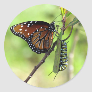Queen Butterfly and Monarch Caterpillar Sticker
