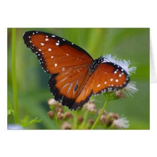 Queen Butterfly Card