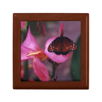 Queen Butterfly Small Square Gift Box