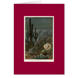 Queen Of The Night Cactus Cards