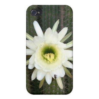Queen Of The Night Cactus Flower, Karoo Region Case For iPhone 4
