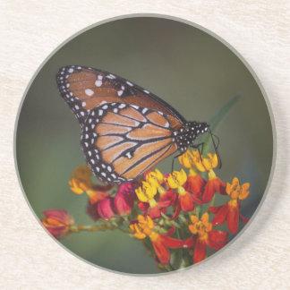 Queen on tropical milkweed coaster