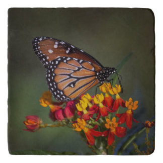 Queen on tropical milkweed trivet