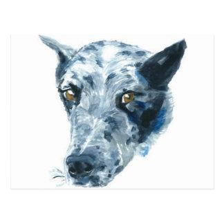 QueensLand Heeler Dog Post Cards