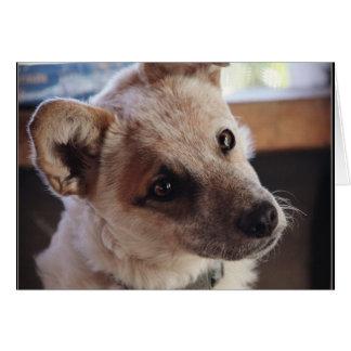 Queensland Heeler Pup Ringo Greeting Card