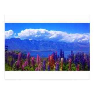 Queenstown New Zealand lupine over Lake Wakatipu Postcard