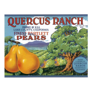 Quercus Ranch Bartlett Pears Postcard