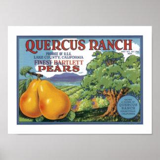 Quercus Ranch Bartlett Pears Poster