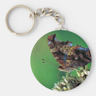 Question Mark butterfly on Common milkweed Key Chains
