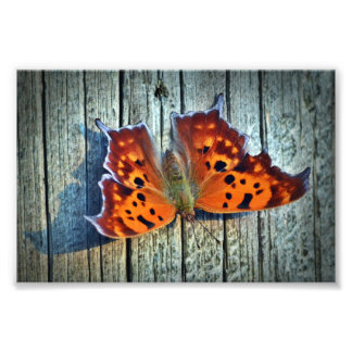 Question Mark Butterfly Photograph
