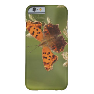 Question Mark butterfly, Polygonia Barely There iPhone 6 Case