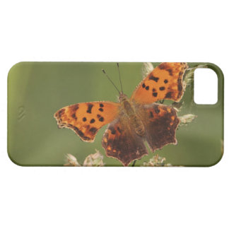Question Mark butterfly, Polygonia iPhone 5 Cover