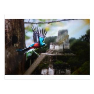 Quetzel in Tikal Postcard