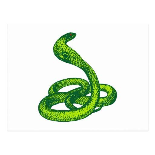 Queue Kobra snake cobra Post Card