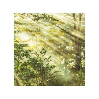 Queulat Park, Patagonia Forest Landscape, Aysen, Canvas Print
