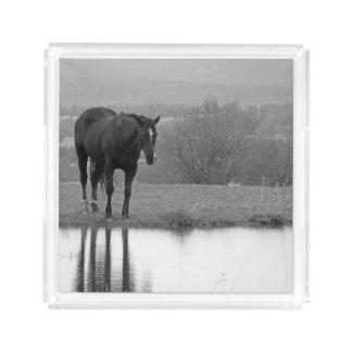 Quiet Reflectionz ~ Horse SquareTray Acrylic Tray