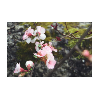 quince blossoms gallery wrapped canvas