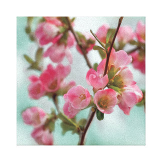 Quince Blossoms Stretched Canvas Print