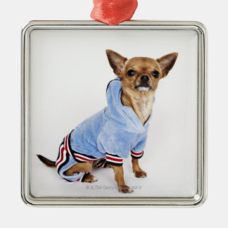 Quirky portrait of a Teacup Chihuahua 2 Silver-Colored Square Decoration