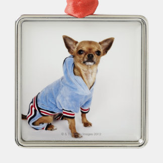 Quirky portrait of a Teacup Chihuahua Ornament