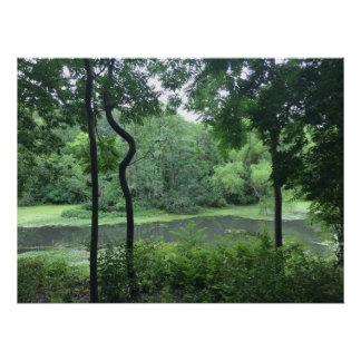Quirky tree pond poster
