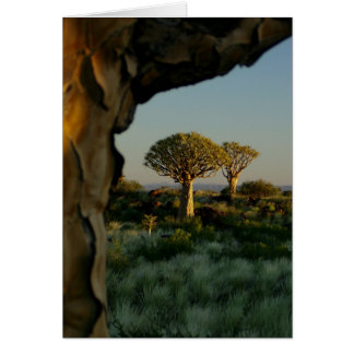 Quiver Tree Forest, Namibia Blank Card