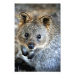 Quokka Western Australian Marsupial Photo Art