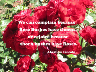 Abraham Lincoln Rose Quote Gifts On Zazzle Au