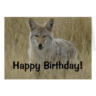 R0002 Coyote in Tall Grass Card