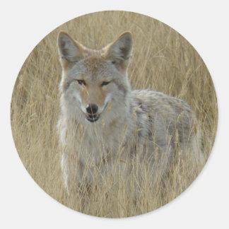 R0002 Coyote Round Sticker