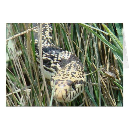 R0004 Bull Snake Card