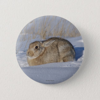 R0005 Cottontail Rabbit 6 Cm Round Badge