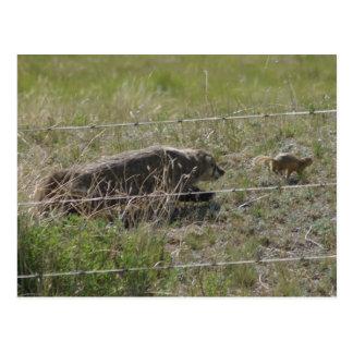 R0012 Badger after Gopher postcard