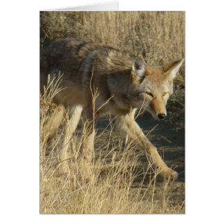 R0014 Coyote Walking Card