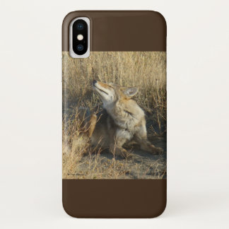 R0017 Coyote Scratching Iphone 8/7 phone case