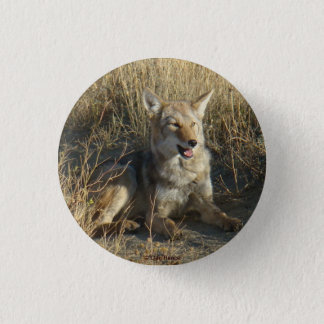R0018 Coyote Laying 3 Cm Round Badge
