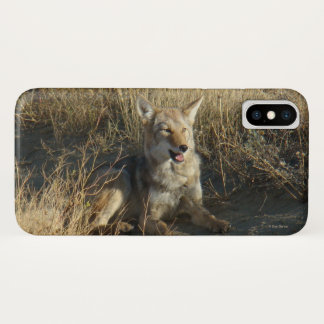 R0018 Coyote Laying Iphone8/7 phone case