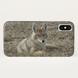 R0022 Coyote Laying IPhone 8/7 phone case